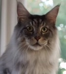 Funny Cat - Kitty Litter Commercial -
