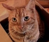 Winners of the 2012 Friskies Cat Video Contest