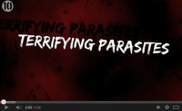 Ten Terrifying Parasites
