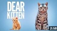 Dear Kitten - the cutest ever cat video